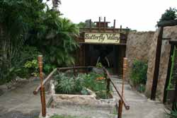 Butterfly Valley – Butterfly Farm - Ramsgate - Activities, Adventure and Things to Do on the South Coast of KwaZulu-Natal